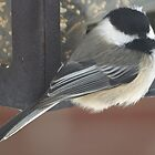 Mad Chickadee by BarbL
