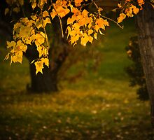 Missing Fall by John  De Bord Photography
