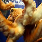 Octopus In Motion by mjds