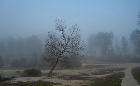 Mist before sunshine by 29Breizh33