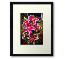 opulence... they has it! Framed Print