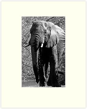 Elephant Spa by Michael  Moss