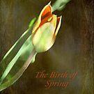A New Spring © by Dawn M. Becker