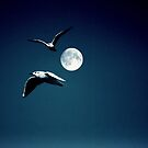 Two Gulls and Moonlight by larry flewers
