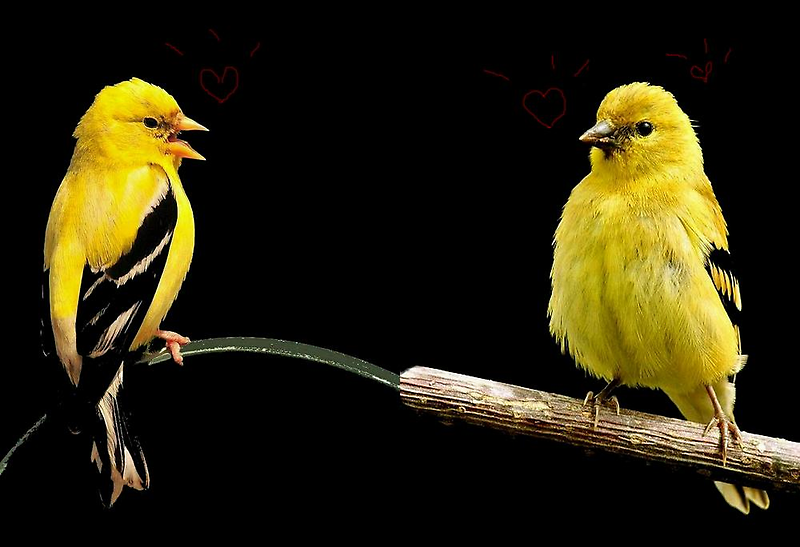 LOVE BIRDS by RoseMarie747