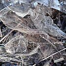 Decaying Leaves by Barbara Anderson
