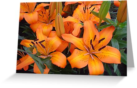 Orange Lillies by Sharon Brown