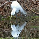Breeding plummage great white egret in reflection by jozi1