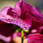 Dew Drop by Saija  Lehtonen