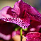 Dew Drop by Saija  Lehtonen