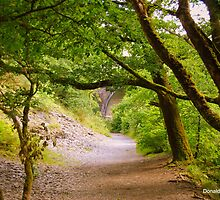 Plymbridge Woods by DonDavisUK