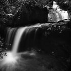 Berry creek - waterfall 1 by shoenberg3