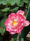 Lovely Lotus by Lynne Kells (earthangel)