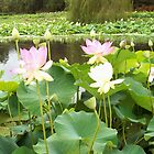Lotus upon Lotus upon Lotus upon Lotus... by Lynne Kells (earthangel)