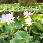 Lotus upon Lotus upon Lotus upon Lotus... by Lynne Kells (earthangel)
