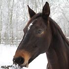 Horse in the Winter by JF Gasser