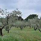 French Olive Grove by Hilda Rytteke