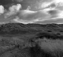 Brauntons Burrows by Anna Leworthy