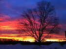 "Valentine's Day Sunrise by Christine ""Xine"" Segalas"