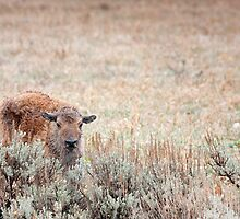 Sad Calf In The Freezing Rain by A.M. Ruttle