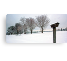 True Snow-Birds Canvas Print