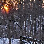 Wooded sunrise 2/13/2011 by mltrue