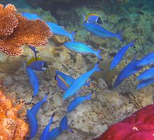 hundreds of blue fish by supergold