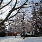 Snow....... Mother Natures White Blanket...... #2 by Larry Llewellyn