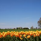 Single tree by the field of tulips by snehit