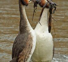 Penguin Dance 2 by Robert Abraham