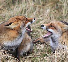 Fox to Fox greeting  by DutchLumix