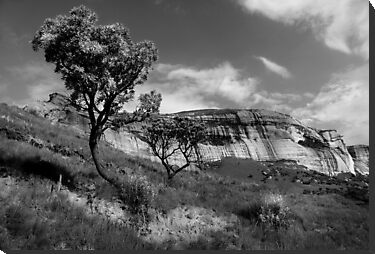 Sandstone Cliffs, Golden Gate, South Africa by Sharon Bishop