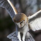 Barn Owl by John Wright