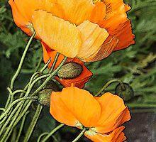 Orange Wonders by Vickie Emms