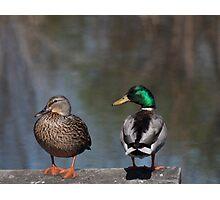 Ducks on a Dock Photographic Print