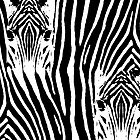 Zebra Stripes by CarolM