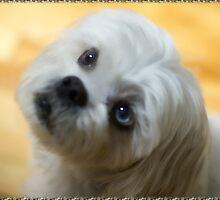 ♥♥My Eyes Adore You U Know I luv U Right ♥♥ (Puggsy)♥♥♥ by ✿✿ Bonita ✿✿ ђєℓℓσ