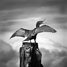Sea Bird by Christine  Wilson Photography