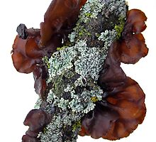 Black Witch's Butter with Lichen On the Side by Carla Wick/Jandelle Petters