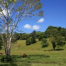 Tallebudgera Valley, SE Queensland. by aussiebushstick