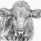 Cow Sketch by Margaret Stockdale