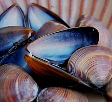 Mussels & Clams by nadinecreates