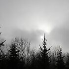 Pinetrees.with.sundisk_Hungary2001JAN by ambrusz