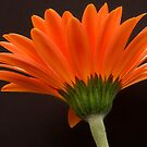 Orange Flames by Ray Clarke