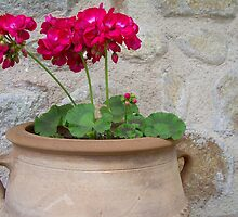Classic - Potted Geranium by RightSideDown