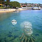 Lefrogtopus fishing in Watsons Bay by Tom Godfrey