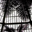 Palm Room, Como Conservatory, Saint Paul  by Timothy Wilkendorf
