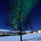 Tree &amp; Aurora Borealis by Frank Olsen