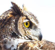Great Horned Owl Portrait by PixlPixi