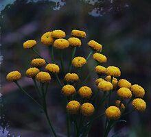 FlowerDrops by RosiLorz